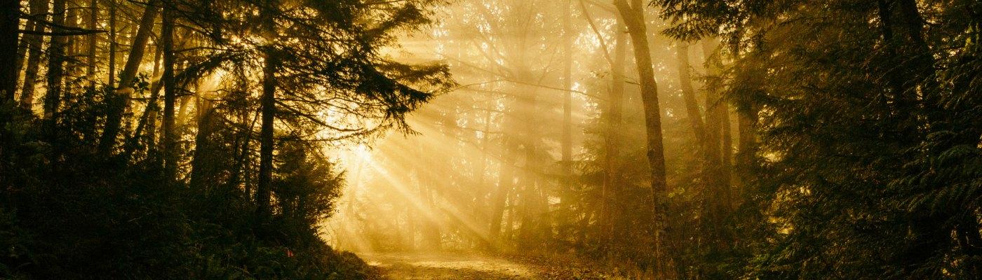 a sunlight path